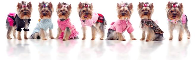 Dogone Hundekleidung Hundemode Hundemantel